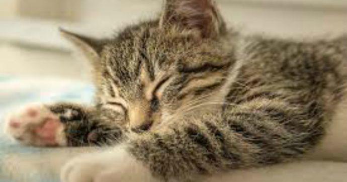 """Festa del gatto 2021, l'Enpa: """"Durante la pandemia ci hanno dato conforto due volte di più"""""""