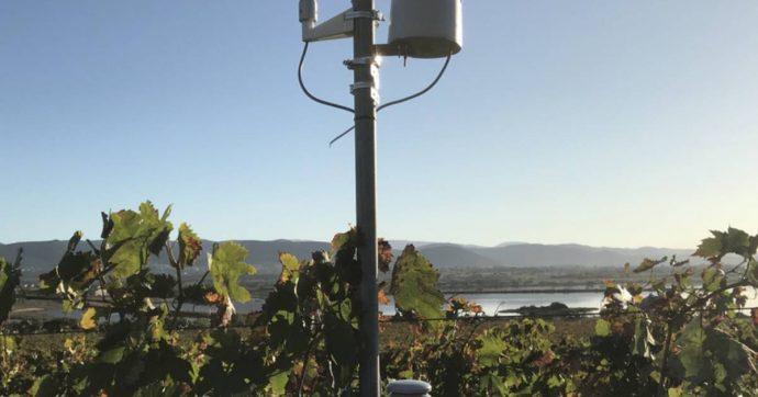 Monitoraggio vigne a 700 km di distanza grazie a un Wi-Fi speciale nato al Politecnico di Torino