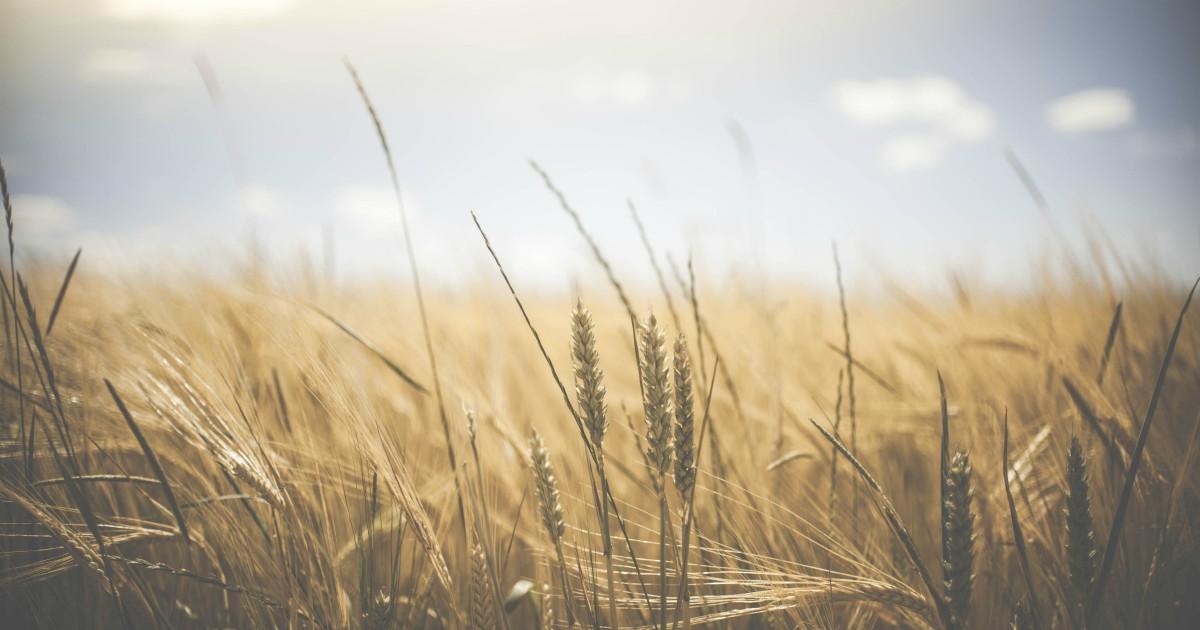 Coltivare bio può rivelarsi più efficace dei metodi tradizionali. Per cinque ottimi motivi