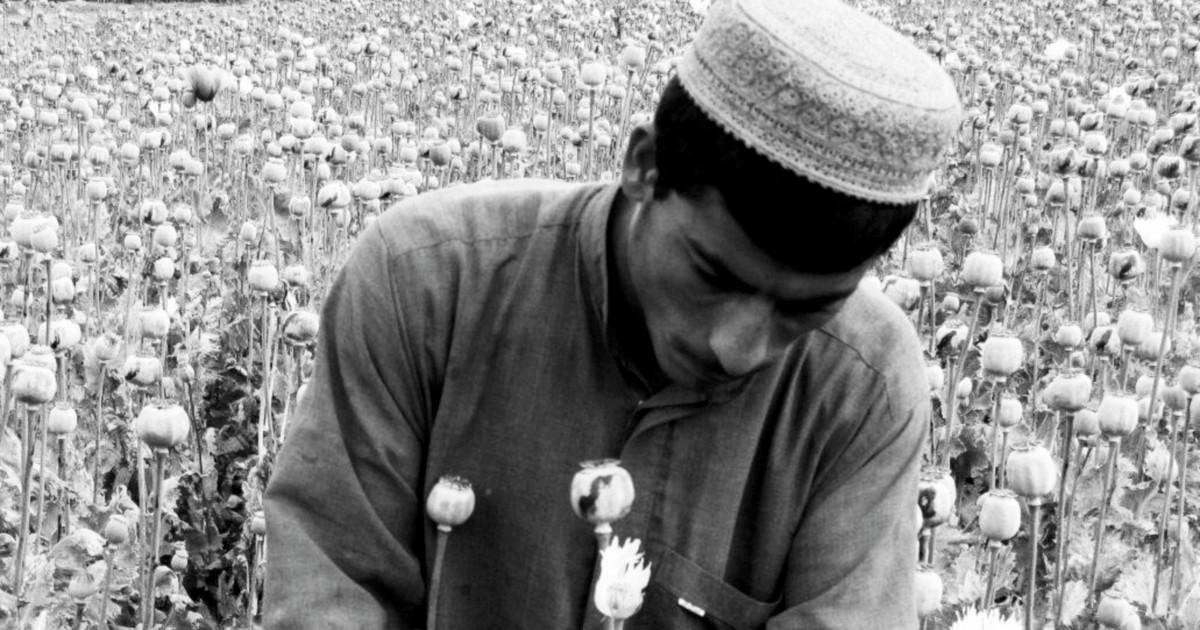 L'oppio afghano ha sconfitto l'Onu
