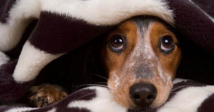 """Coronavirus, la bufala sugli animali domestici sbugiardata a Chi l'ha Visto: """"Liberatevene, salvatevi"""""""