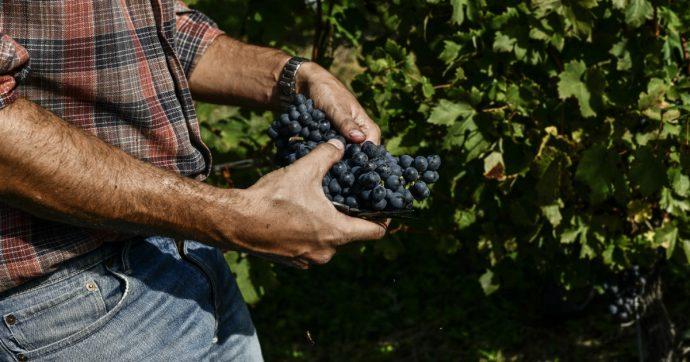Reati agroalimentari, la riforma Caselli avrà successo solo se tutti faranno rete