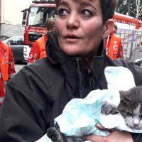gatto salvato a sesto san giovanni