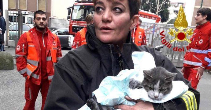 """Incendio in appartamento: gatto salvato e """"rianimato"""" dai Vigili del fuoco a Sesto San Giovanni"""