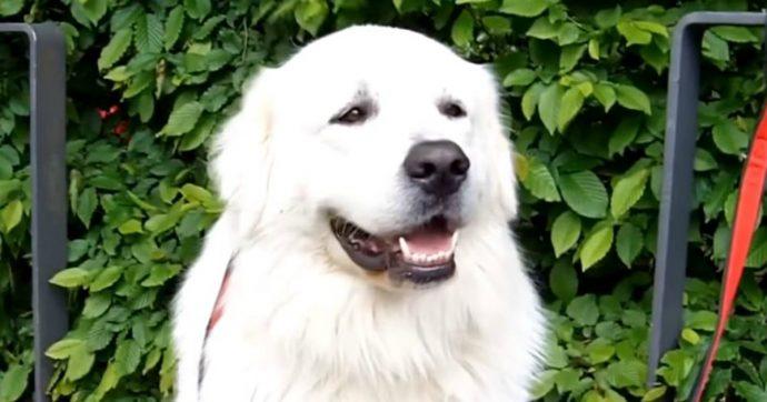 """Lecce, cane muore d'infarto a Capodanno per paura dei fuochi d'artificio. Le associazioni animaliste: """"Serve una legge per vietarli"""""""