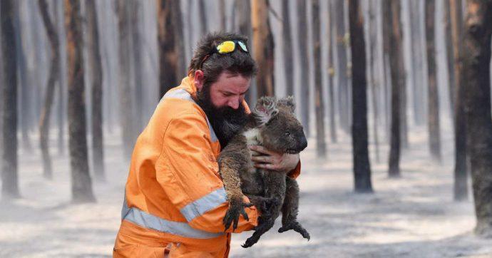 """Australia, il Wwf: """"Si stima un miliardo di animali uccisi dal fuoco"""". Il fumo degli incendi visibile fino in Cile e in Argentina"""