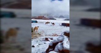 Cambiamenti climatici, dall'Arabia Saudita all'Afghanistan: la neve cade nel deserto. E le immagini fanno il giro del mondo