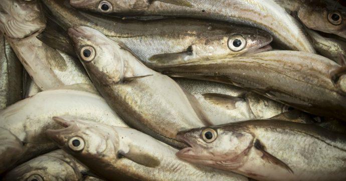 Catania, usavano la calce edilizia nella lavorazione del pesce: stabilimento sottoposto a sequestro preventivo