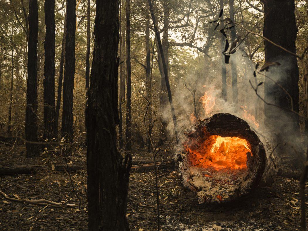 Australian bushfire, Jervis Bay, January 2019