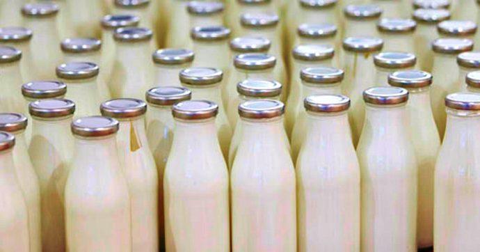 Adolfo Greco, l'imprenditore del latte resta in carcere. La nuova accusa: concorso esterno in associazione camorristica con i Casalesi
