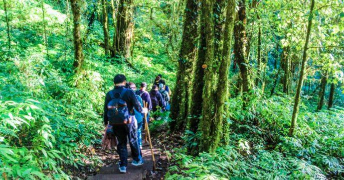 Foreste e terreni da salvare per le future generazioni: è lecito sognare, no?