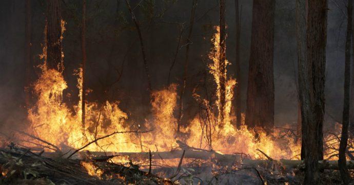 """Australia, maxi incendio a Canberra. Le autorità: """"Restate in casa, uscire è pericoloso"""""""