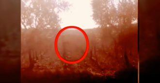 Foggia, è caccia alla pantera: avvistata nelle campagne. Le immagini riprese da un contadino