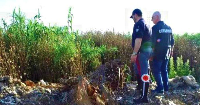 Rifiuti, via libera della Regione Lazio all'allargamento della discarica sotto inchiesta per sversamenti illegali di percolato e compost