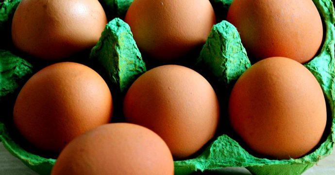 """Ministero della Salute ritira dal mercato uova biologiche Amadori, Cascina Italia e Conad. Richiamo anche per formaggio """"Puzzone di Moena"""""""