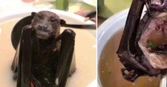 """""""La mia ignoranza è una colpa, non sapevo del Coronavirus"""": le scuse della blogger che mangiava la zuppa di pipistrelli"""