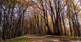 Sulle foreste italiane vige l'anarchia: i tagli non si fermano nemmeno nelle zone sotto tutela