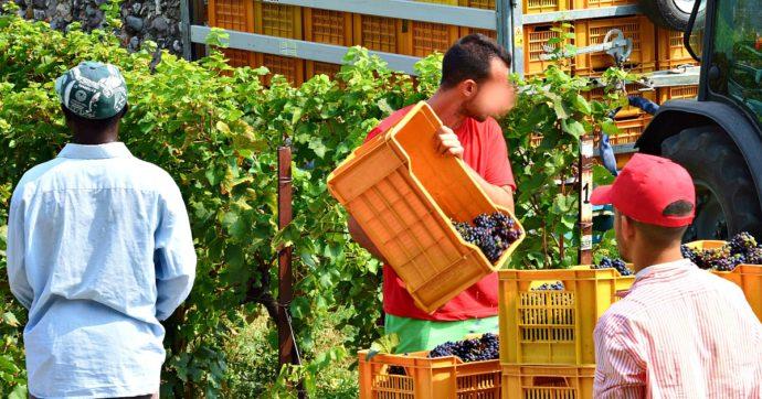 """L'atto d'accusa dell'Onu: """"In Italia l'industria alimentare sfrutta i braccianti. Orari lunghi, paghe basse e migranti lasciati in un limbo"""""""