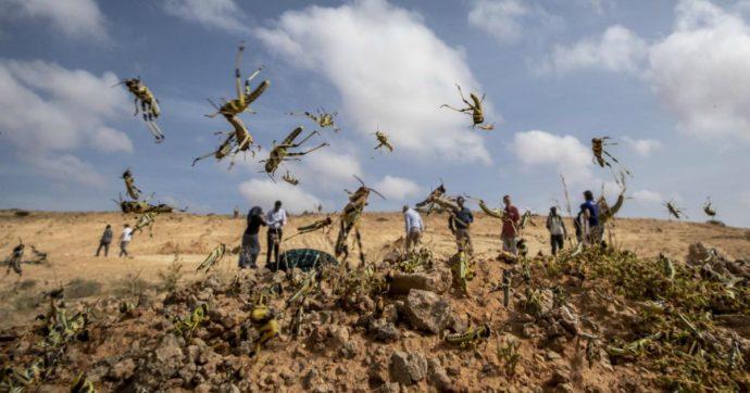 Africa, invasione di locuste anche in Tanzania e Uganda: 2mila soldati spruzzano pesticidi