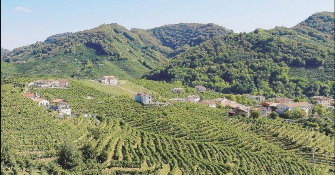 """Colline del Prosecco, la denuncia dei parroci contro pesticidi e sbancamenti del terreno: """"Condotta irresponsabile in nome del profitto"""""""