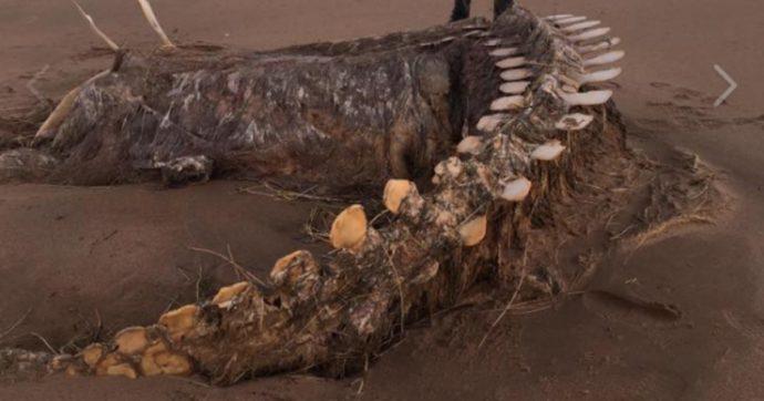 """Scozia, dopo la tempesta Ciara riaffiora uno scheletro misterioso: """"È il mostro di Loch Ness"""""""
