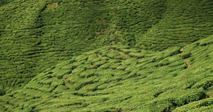 Nespresso, sfruttamento di bambini nelle piantagioni di caffè. George Clooney prende le distanze