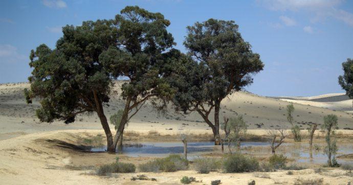 Le risorse idriche scarseggiano. E in Medio Oriente la situazione è drammatica
