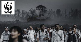 """Coronavirus, per il WWF l'emergenza è anche la conseguenza del nostro impatto sulla natura: """"Difendendola si tutela la salute"""""""