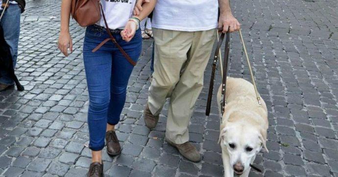 Coronavirus, a Trento c'è chi si prende cura degli animali delle persone colpite. Una bella iniziativa