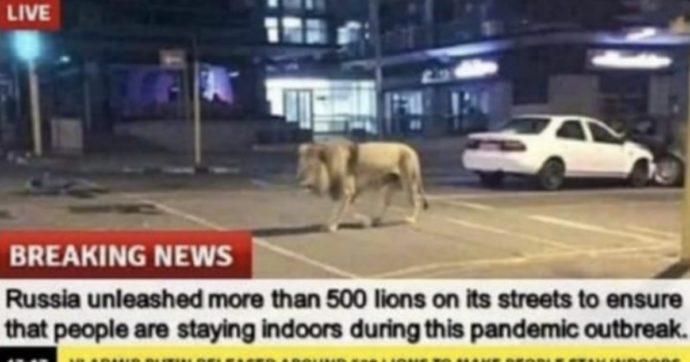 """Coronavirus, """"Putin ha liberato 500 leoni in strada così la gente sta a casa """". Ma è una fake news: ecco come è nata"""
