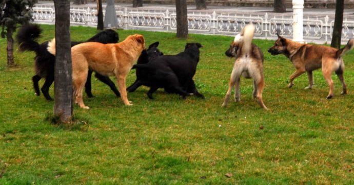 'Il secondo principio di Archimede': le personalità umane viste dagli occhi di un cane