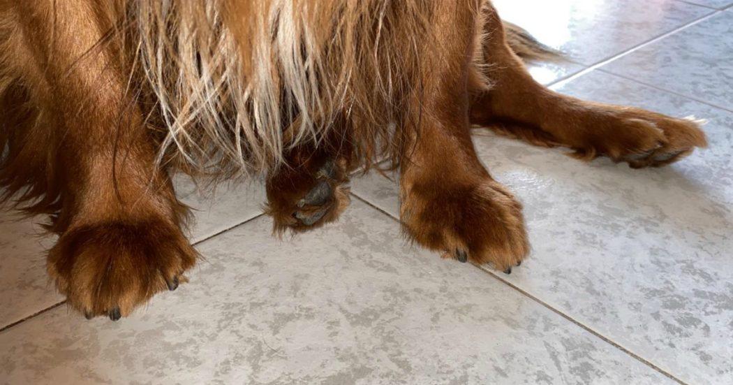 Coronavirus, dalle mascherine fatte in casa all'acqua del rubinetto fino alle zampe dei cani: 10 bufale smontate dal ministero