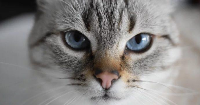 Coronavirus, gatto muore dopo che i padroni usano candeggina per sterilizzare le zampe
