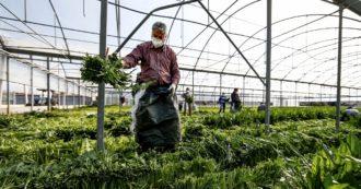 Decreto Rilancio, le misure per i lavoratori: dal bonus 600 euro per le partite Iva alla cassa integrazione fino a reddito di emergenza