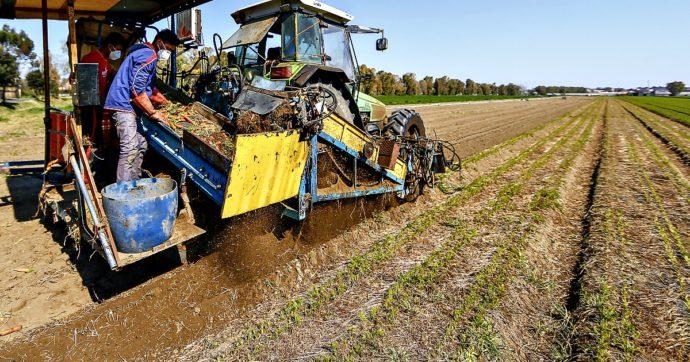 Decreto Semplificazioni, si rischia un mercato occulto nel settore agroalimentare