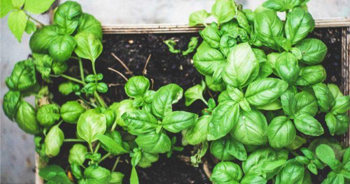 L'orto in vaso: consigli per coltivare piante aromatiche sul balcone