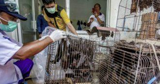 """Coronavirus, Wall Street Journal: """"La Cina ostacola gli esperti che studiano l'origine del virus. Dati tenuti segreti"""""""