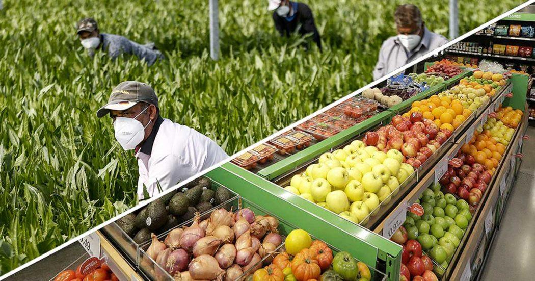 """Frutta e verdura, la grande distribuzione impone i prezzi agli agricoltori: """"A noi danno 30-40 centesimi. Poi vendono a 2,5 euro"""". Ecco la filiera che facilita illegalità e sfruttamento"""