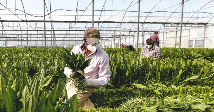 Lavoratori stranieri, se la Legge Bellanova non dà grandi risultati è colpa dei decreti Sicurezza
