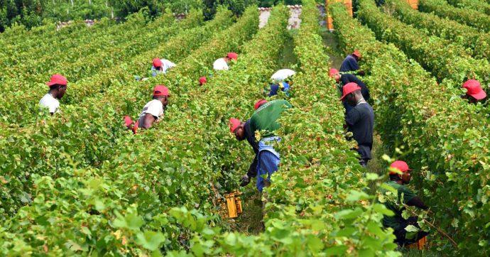 Lavoratori stranieri: oggi i braccianti scioperano per combattere in nome della dignità