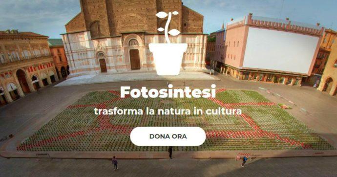 """Coronavirus, 6mila piantine colorano Piazza Maggiore a Bologna. Le Sardine: """"In vendita per sostenere la cultura"""". Esaurite in poche ore"""