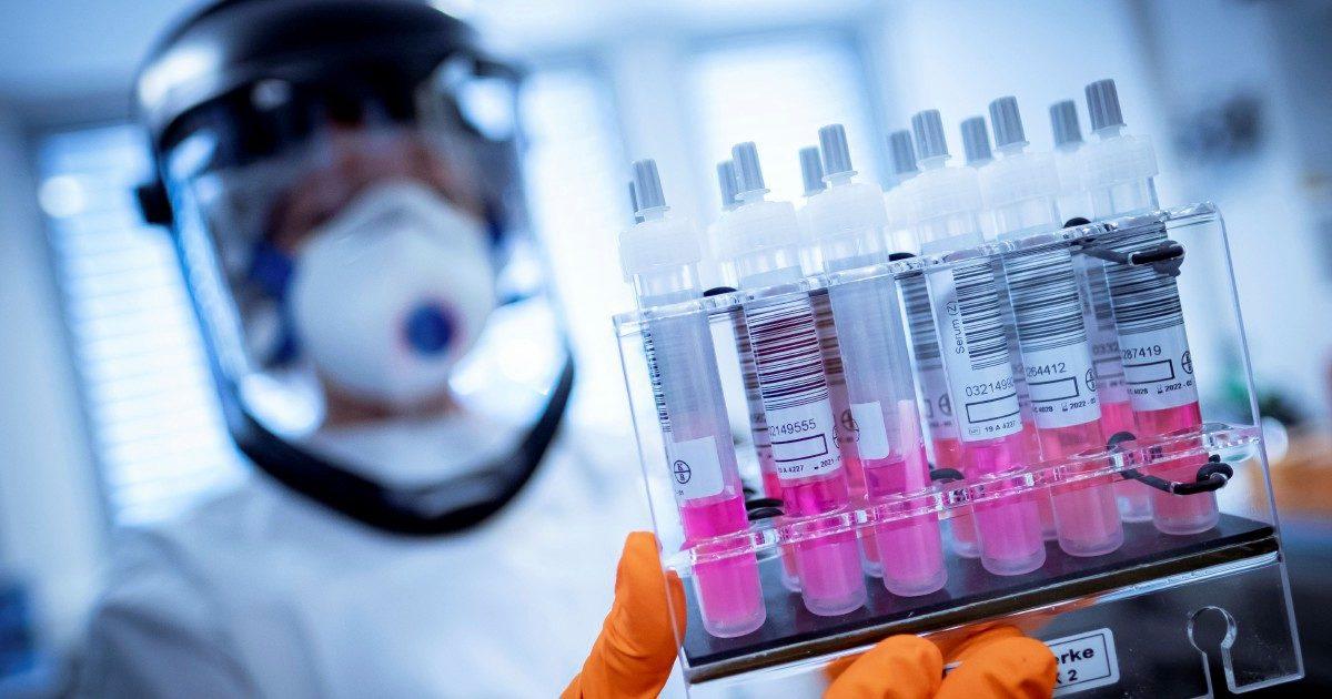 Vaccino, una doccia fredda su Oxford:  il macaco si ammala