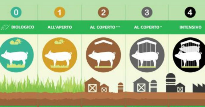 """Suini, proposto sistema di etichette che si basi sul metodo di allevamento: """"Chiaro e preciso, per riconoscere che rispetta gli animali"""""""