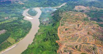 Eni, deforestazione in Indonesia  per fare il biodiesel