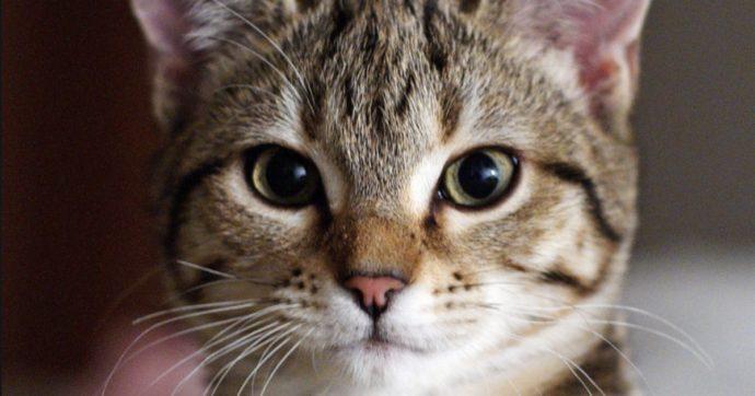Il gatto di casa lo graffia e lui lo uccide con crudeltà davanti a figlio e passanti