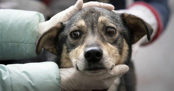 """Cina, al via il festival della carne di cane di Yulin: migliaia di animali macellati. """"Crudeltà incredibile"""""""