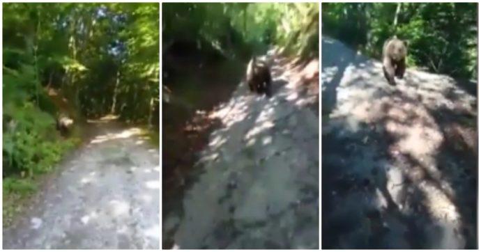 Trentino, per i politici c'è un'unica soluzione per gli orsi: abbatterli. Ma hanno letto bene i report?