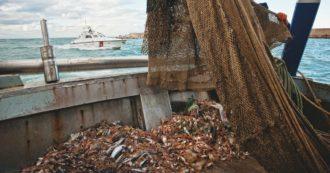 """Elba, ancora in mare 56 ecoballe cadute 5 anni fa. Esposto Greenpeace contro la Toscana: """"Rossi restituì la garanzia alla ditta di spedizione"""""""