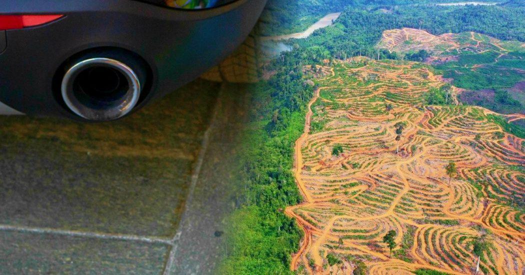 """Olio di palma, non solo biscotti: in Italia il 70% usato per biocarburanti e bioenergie. """"Paghiamo 900 milioni annui per distruggere foreste"""""""
