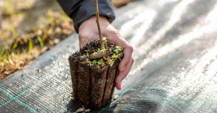 """Milano, arriva la prima Food Forest pubblica: 2mila piante da """"adottare"""" per imparare a conoscere ciò che mangiamo"""